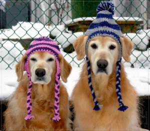 The Dogs Are Ready for Winter